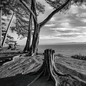 Douglas Preserve, Santa Barbara, CA , photograph by © Oliver Tollison