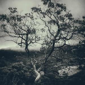 landscape photography tree art for sale by Oliver Tollison