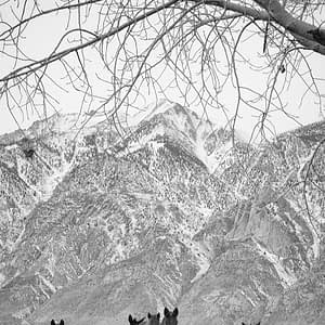 b&w wild horses in the eastern Sierras, California