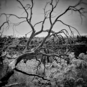 Tree in Mesa Verde National Park, Montezuma County, Colorado