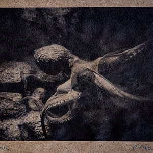 photograph of octopus on recycled paper